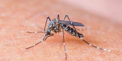 Pekín confirma su primer caso de virus zika