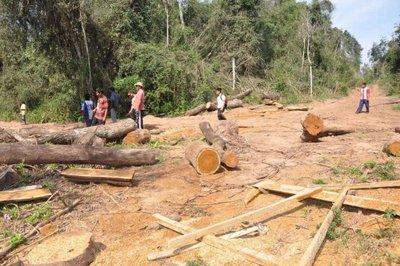 """Fiscalía declara """"guerra"""" a los depredadores de áreas boscosas"""