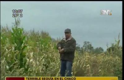 Terrible sequía en el Chaco: Pérdidas ecológicas y económicas