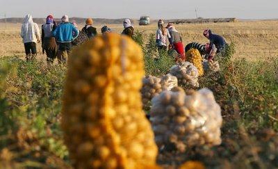 La vuelta al mundo con restricciones de los alimentos sanos