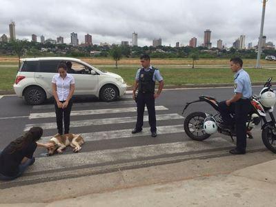 Un conductor desalmado atropella a dos perros