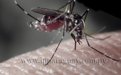Dengue: Pese a que no se registran nuevos casos piden no bajar la guardia