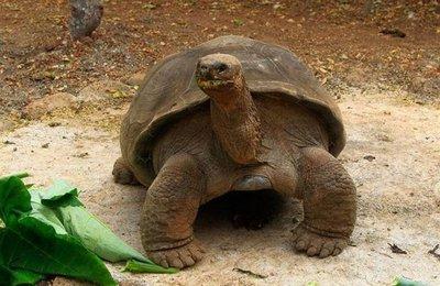 Censo revela recuperación de población de tortugas