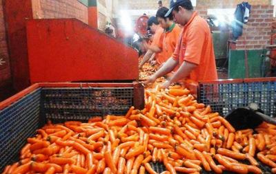 Sello de agricultura familiar iniciará en el rubro zanahoria