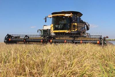 México se abre como mercado destino de arroz nacional