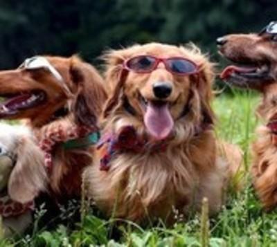 Piden cuidar a las mascotas del calor