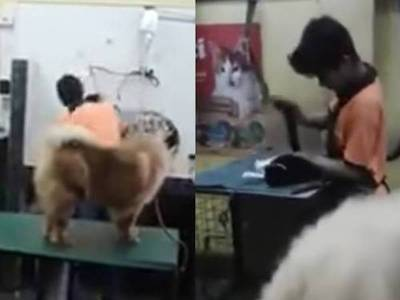 """Propietario de veterinaria se defiende: """"Yo condeno lo que pasó"""""""