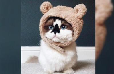Albert Baby Cat: el gato más famoso del mundo que revoluciona las redes sociales