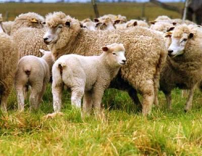 Destacan el exitoso primer envío de lana paraguaya al Uruguay