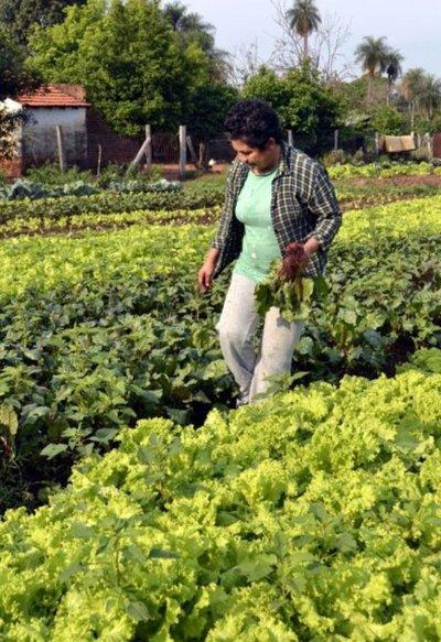 Sector hortícola requiere de más invernaderos