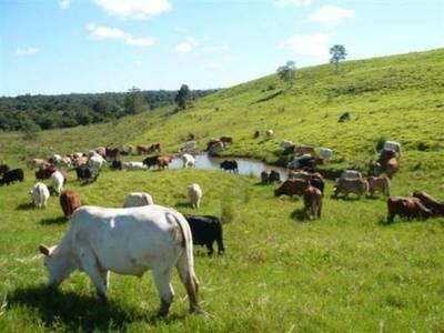 San Pedro: Investigan desaparición de 1.800 cabezas de ganado
