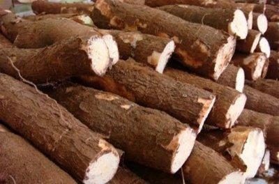 El futuro del frijol y la yuca hace escala en Colombia