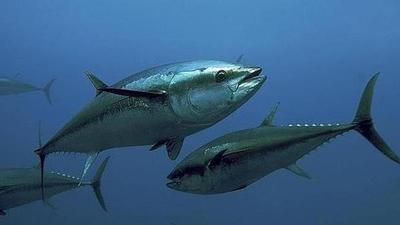 El mercurio del pescado podría aumentar el riesgo de esclerosis lateral amiotrófica