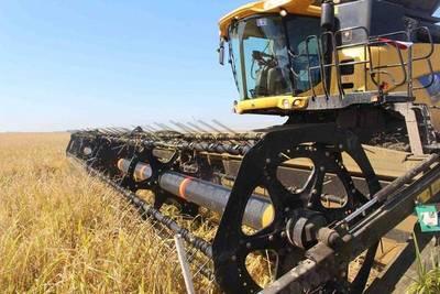 Paraguay exportará arroz y pollo a Dubai