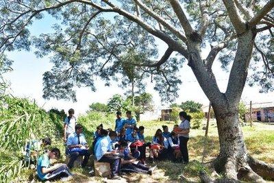 Estudiar bajo árboles: Dolor de cabeza hasta daño ocular