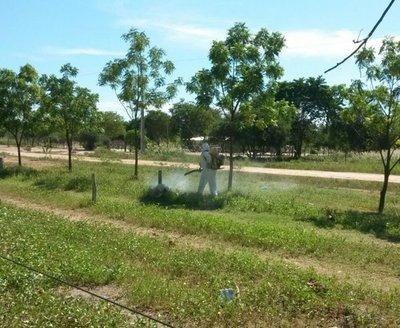 Intensifican fumigación contra langostas en el Chaco