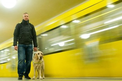 El perro guía con seguridad a los ciegos
