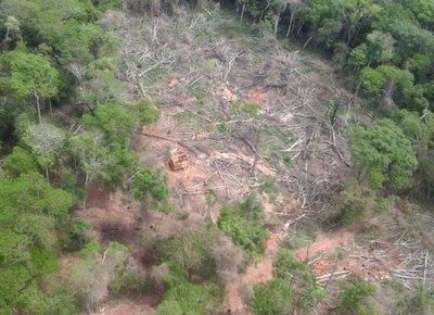 """""""Estamos ante la ausencia de una política forestal"""""""