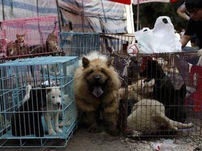 Dos años de cárcel para quien coma perritos en Taiwán