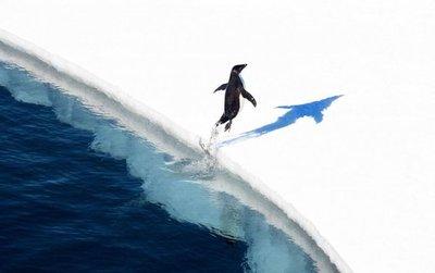Piden más protección para la Antártida en el Día Mundial del Pingüino