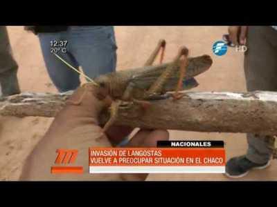 Invasión de langostas vuelve al Chaco