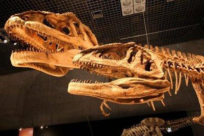 Descubren la identidad del fósil de dinosaurio Baby Louie