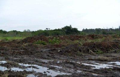 Inventan reuniones y audiencias para justificar devastación de Parque Guasu