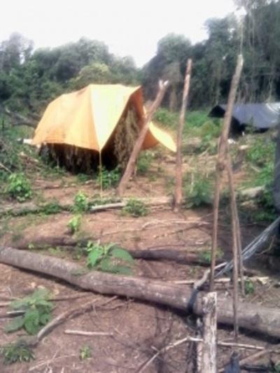 Campamento de marihuana en reserva natural