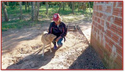 Rocky: el perro héroe que evitó violento asalto