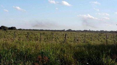 Langostas aumentan en el Chaco Central
