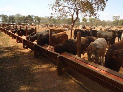 El sector agropecuario en Paraguay es 8,5 veces más rentable que en Uruguay