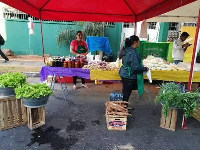 Mandioca dietética en feria de productores