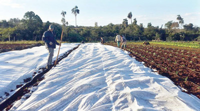 Hortigranjeros hacen lo que pueden para proteger cultivos