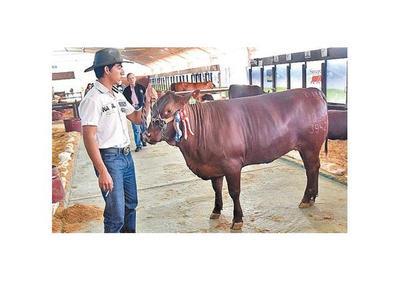 Tacuara  Cardozo adquiere la Senepol más cara de la Expo
