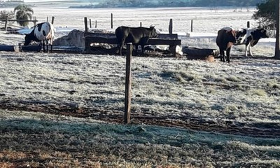 Declaran emergencia agrícola en Concepción