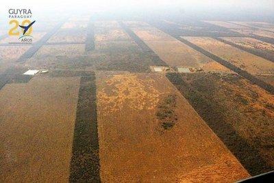 Constatan deforestación criminal en el Chaco
