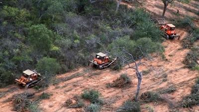 Bosques del Chaco siguen desapareciendo