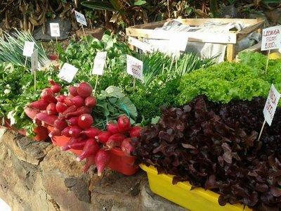 Realizan feria agroecológica en la Plaza Italia
