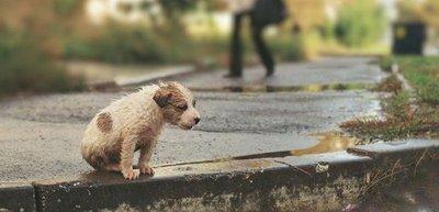 Maltrato animal: esperan aprobación de Ley