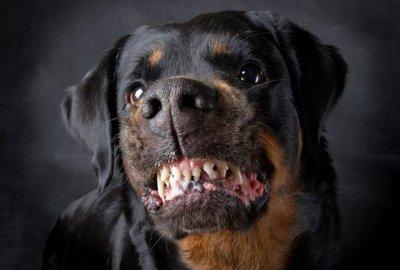 Cinco años de cárcel para dueños de perros agresores