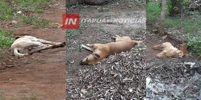 DENUNCIAN ENVENENAMIENTO MASIVO DE PERROS EN ENCARNACIÓN