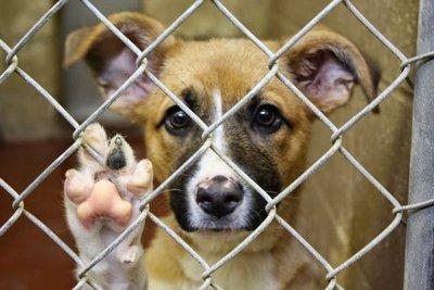 Realizan evento solidario para ayudar a mascotas