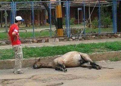Prisión por maltrato animal