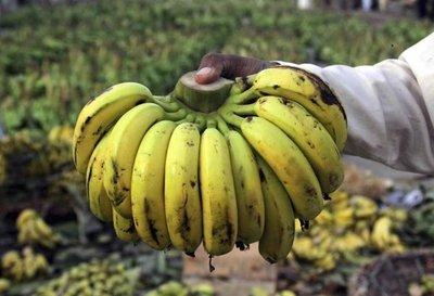 Hallan posible respuesta a hongo de banano