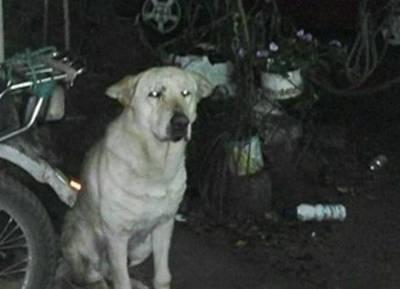Muerte por mordedura de perro: Fiscalía llama a los testigos