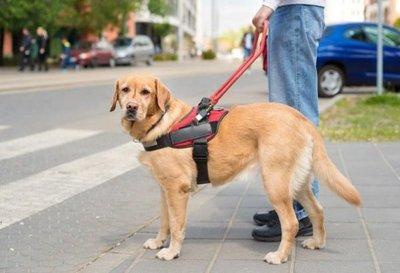 Aprueban que perros guías estén en espacios públicos