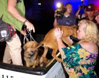 """Rescatan perros de coreano: """"Les tenían atados todo el día, sin agua ni comida"""""""