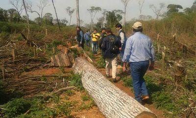 SEAM asegura haber reducido la deforestación