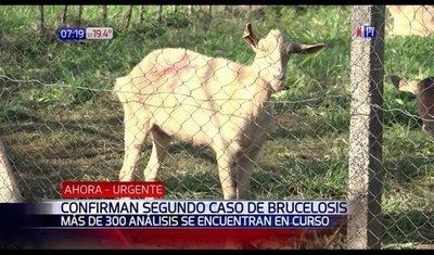 Otro posible caso confirmado y 29 sospechosos de brucelosis
