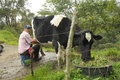MIC apoyará a productores lecheros